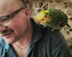 Купить Говорящий Желтоголовый Амазон только на fauna.by