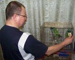 китайский попугай есть яблоко