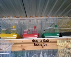 parrots_kletki_0028