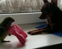 купить попугая монах на фауна бай