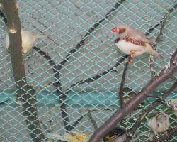 певчие птицы в Минске
