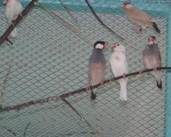 Отличный выбор певчих птиц