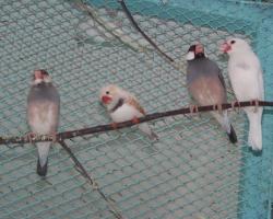 декоративные птицы в Минске