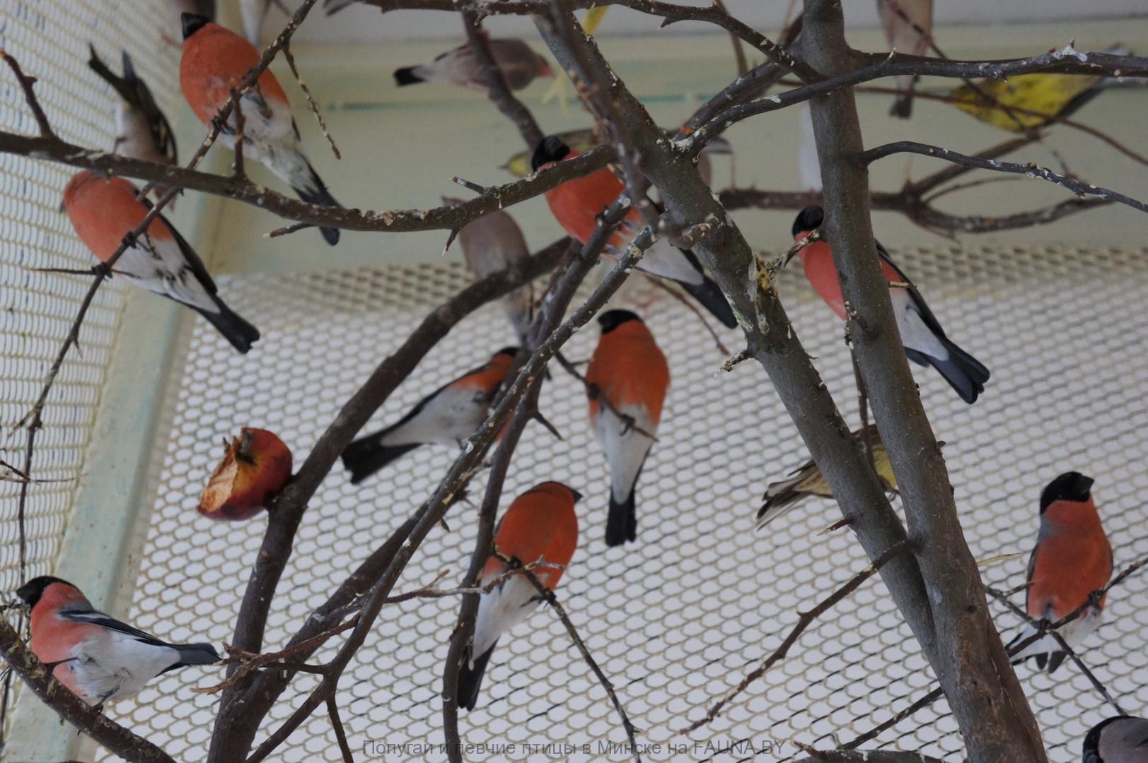 Птиц в домашних условиях 1000