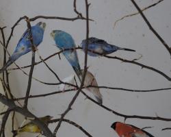 Птичий калейдоскоп вольер №1 - снегири, свиристели, рисовки, овсянки, зяблики и зеленушки уживаются в одном вольере с волнистыми попугайчиками и другими миролюбивыми птицами
