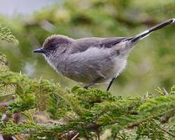 Славки (лат. Sylvia) — род птиц из семейства славковых (Sylviidae)