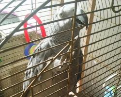 купить попугая Жако в Минске на FAUNA.by