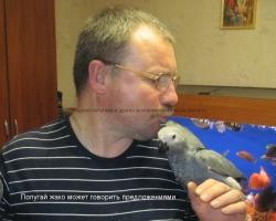 купить попугая говорящего - попугай жако в минске