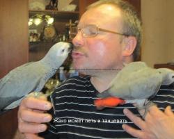 где можно купить попугая? на FAUNA.by
