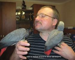 детеныши жако выкормыши - купить попугая жако в минске