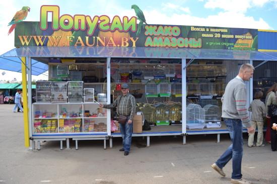 купить попугая или других певчих и декоративных птиц в Минске